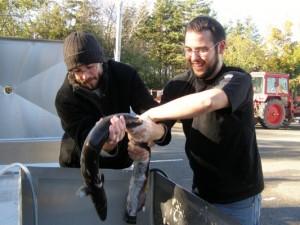Eel Wrastling