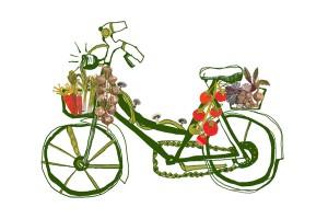 vegetable-bike-web-300x200