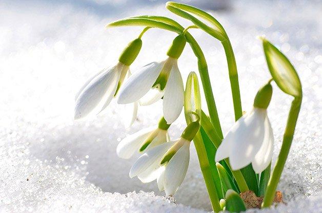 WINTER-FLOWER-2